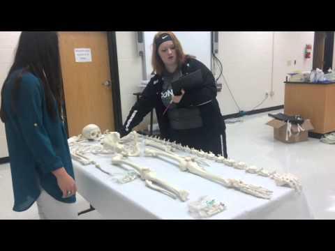 Bigelow high school Bones Project