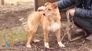 Хорошенькая молодая собака Ронда в добрые руки!