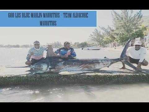BIG GAME FISHING MAURITIUS 2019, 600 LBS BLUE MARLIN - ONSTRIKE MAURITUS