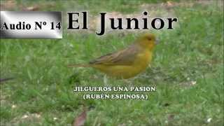 Jilgueros una pasion - CD del Junior