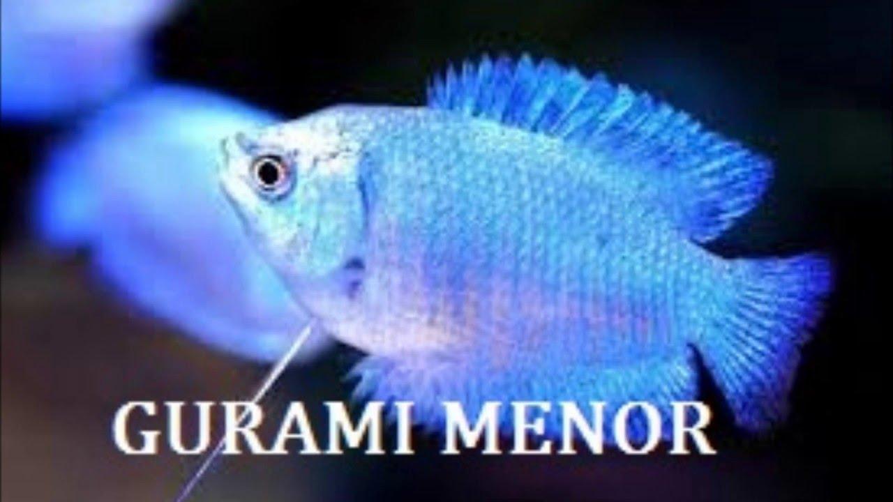 Top 10 peces mas bonitos de agua dulce doovi for Peces agua dulce