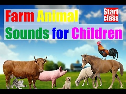 FARM Animals! Real Barnyard Pets SOUNDS   Learning Fun with ...