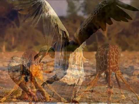 L'Afrique chanter par SHAKIRA