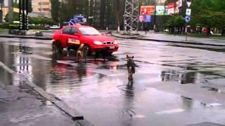 TIMES mk ua Бродячие собаки в Николаеве атаковали такси