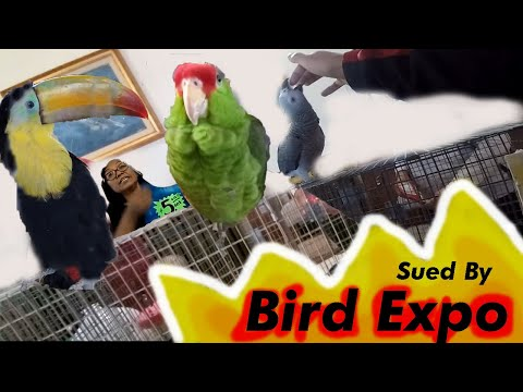 ALMOST SUED DURING RARE BIRD EXPO FOR STEALING ALL BIRDS LOVE!  | PetBemo