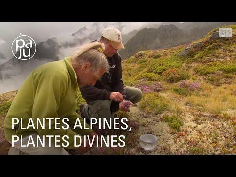 """""""Plantes alpines, plantes divines"""" ou le plus vieux jardin botanique alpin du monde"""