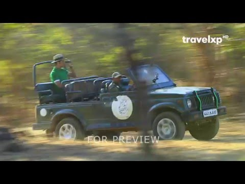 Bada Weekend - Gir Forest