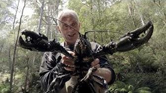 Il parvient à pêcher une écrevisse géante ! - Jeremy Wade, en eaux troubles