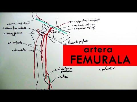 inflamația femurală artrita articulației umărului provoacă tratament