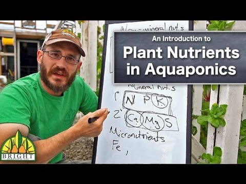 How to Manage Plant Nutrients in Aquaponics