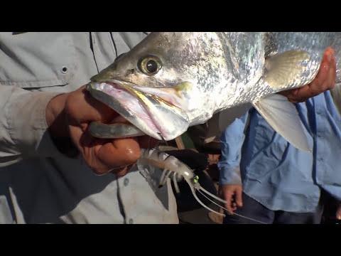 Barra Fishing FNQ  - BCF