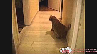 Юмор кошки 4