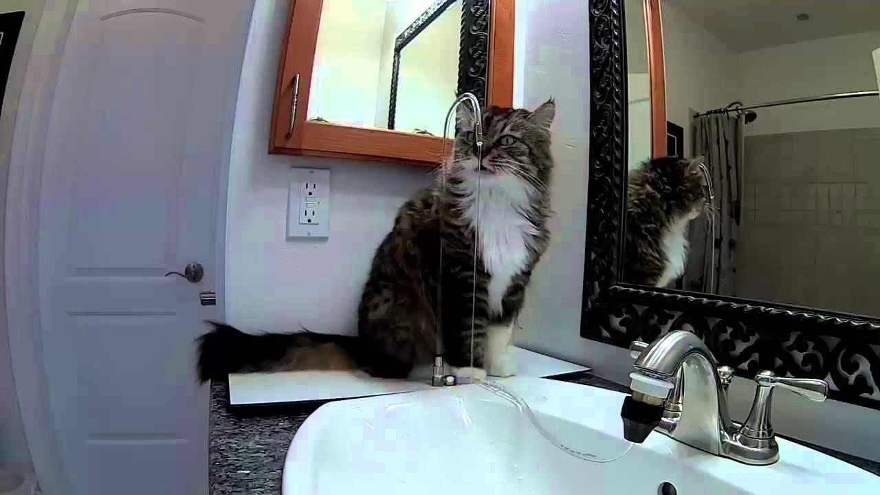 AquaPurr in a Bathroom - YouTube