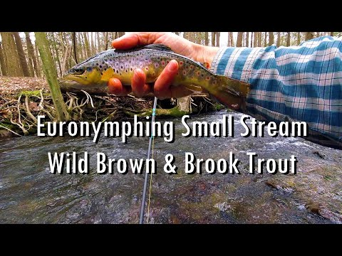wbd---euronymphing-small-stream-class-a-central-pa
