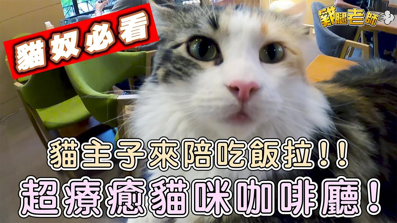 【Vlog#7】貓奴必看!貓奴天堂!被短腿貓團團包圍 超療癒貓咪咖啡廳 貓主子來陪吃飯啦 |東森山林酒店隱藏喵星人景點