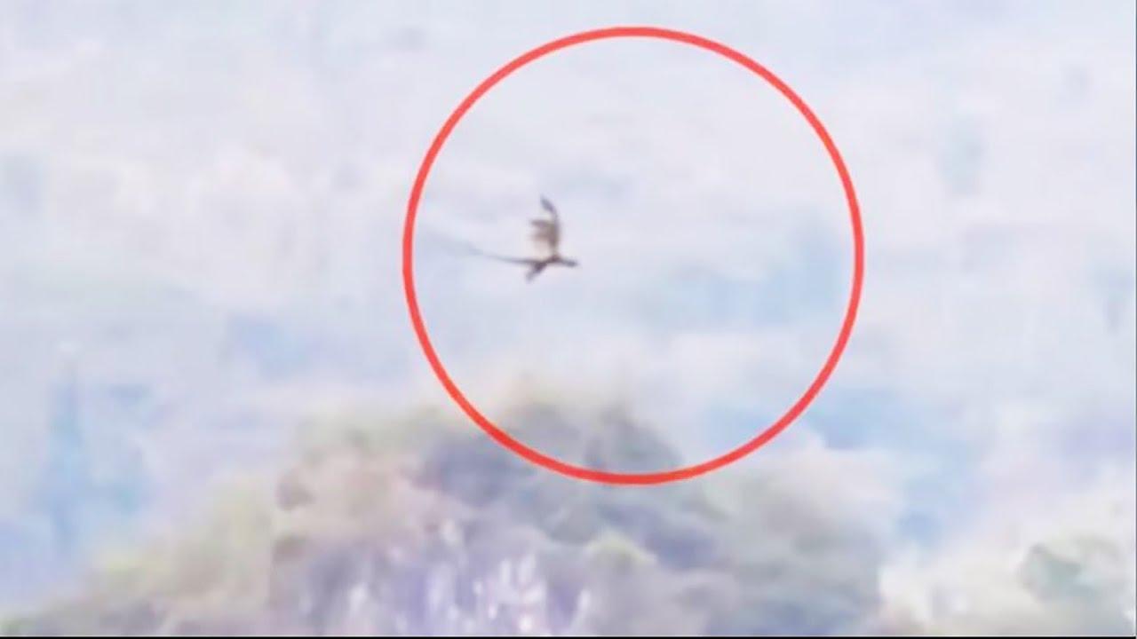 Đoạn Phim Ghi Được Hình Ảnh Con Rồng Bí Ẩn Đang Bay Qua Núi Ở Trung Quốc | Khoa Học Huyền Bí