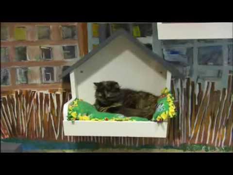 Oregon Humane Society Shelter Tour