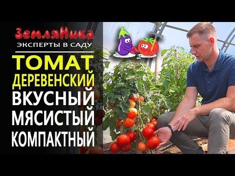 Томат Деревенский от Агрофирмы Партнер. Компактный и очень урожайный сорт. Огород на балконе.