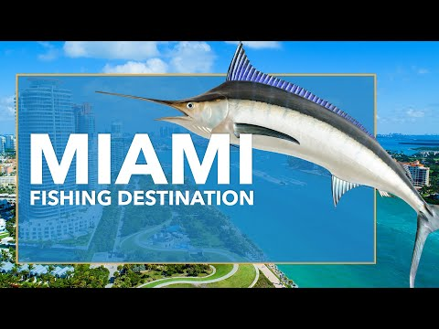 Fishing In Miami: All You Need To Know | FishingBooker