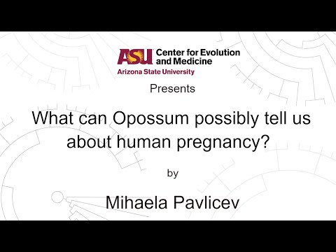 What can Opossum possibly tell us about human pregnancy? | Mihaela Pavlicev
