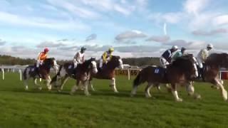 Clydesdale Horse Race, Exeter Racecourse. November 2016