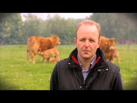 Beleef de Kern -  Hoek - Limousin - slager Peter Mol