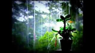 Moonlight Crush - Kissed In The Rain [Lyrics]