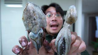 쭈꾸미랑 갑오징어 80마리 잡아서 먹어보자!