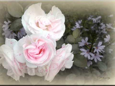 yksi ruusu on kasvanut laaksossa