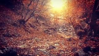 Fahriye evce - Hasretle nasıl başa çıkar ağaçlar(şiir)