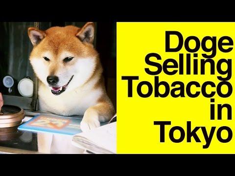 Doge selling tobacco in Tokyo // Shiba Inu