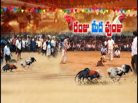 Sankranthi Celebrations |