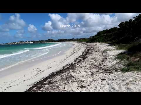 Sargassum Seaweed update (Part 3) Antigua, 2019 - YouTube