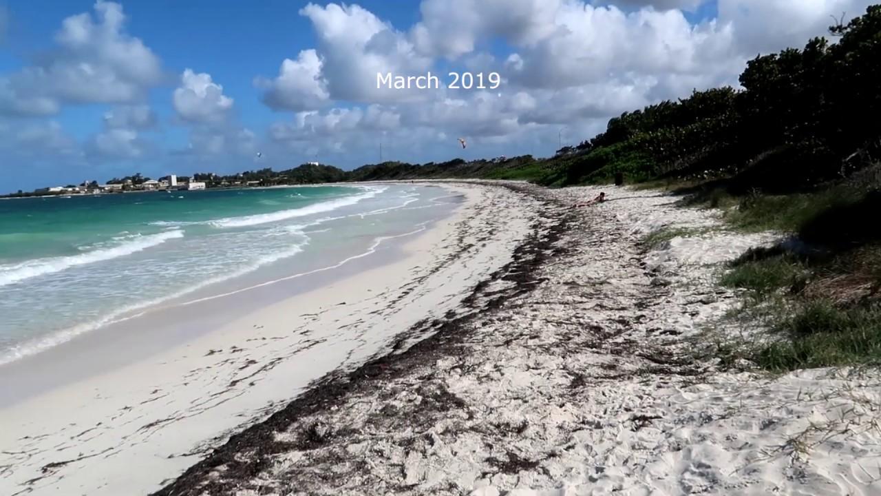 Sargassum Seaweed update (Part 3) Antigua, 2019