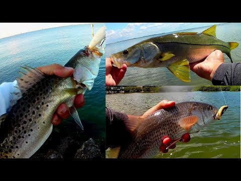 INSHORE SLAM Wade Fishing Tampa Bay Flats