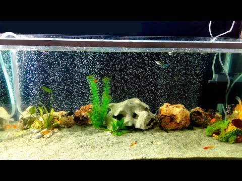 How to make Aquarium Bubble Wall used hose Pipe very fast / DIY