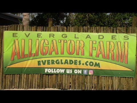 Alligator Farm! Last Video From Florida