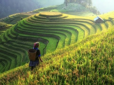 Breathtaking Beauty of Terraced Rice Fields of Vietnam