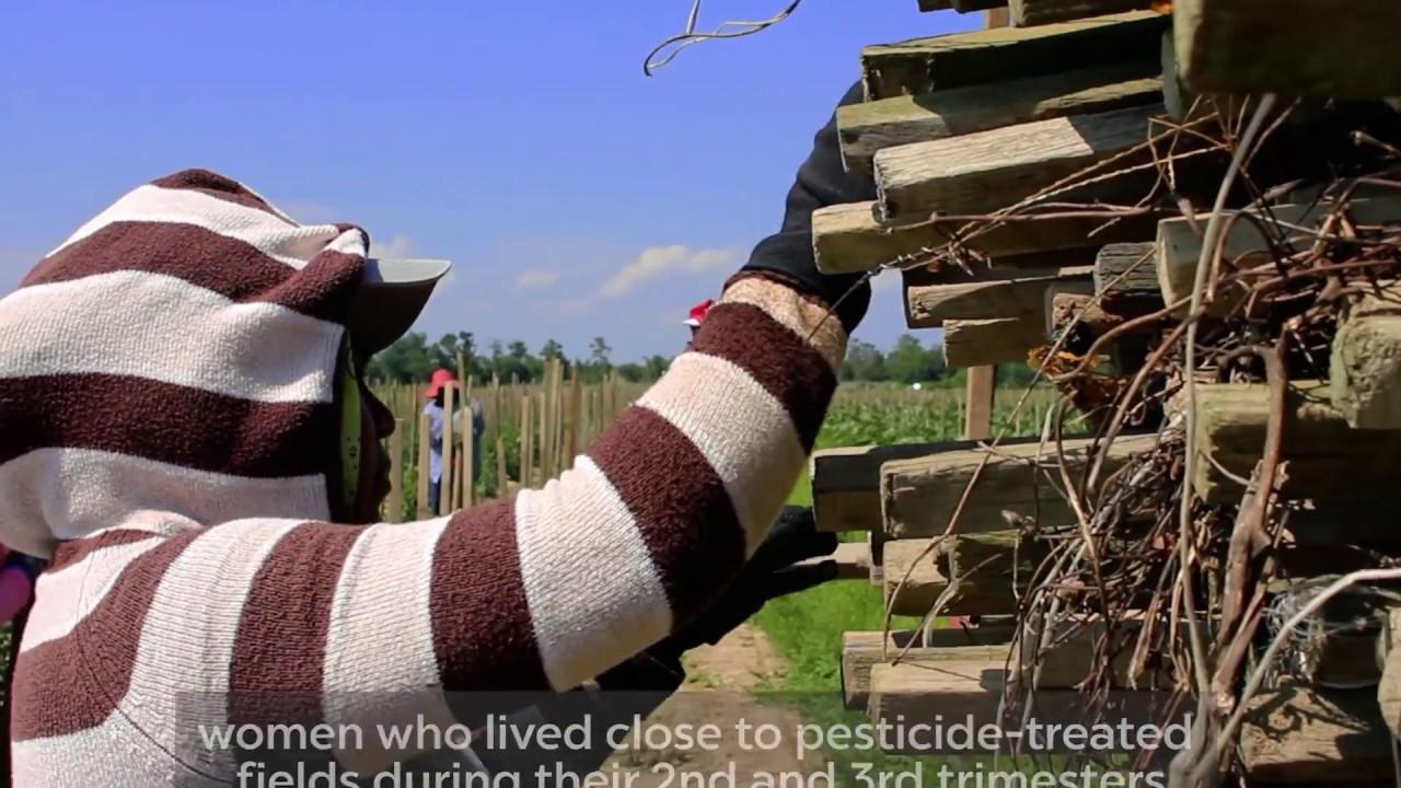 Pregnancy & Pesticides – Association of Farmworker