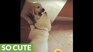 Puppy's precious first encounter with mirror reflection