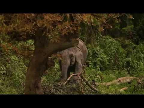 รายการ เรื่องเล่าข้ามโลก ตอนที่ 36 Asian Elephant