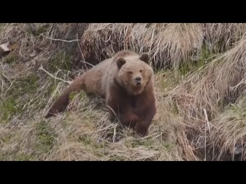 Magadan 2019    Медвежий рай 2019