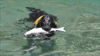 晴れた夏の日の川遊び。 ふたりを見ているだけで癒される。