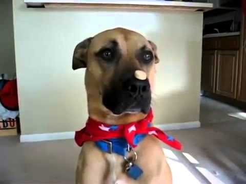 Funny Animals Video – The Best Dog Trick Ever!
