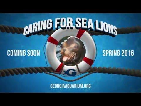 Georgia Aquarium Sea Lion Pupdate!