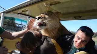 �������� ���� Алма-Ата .доброе утро от льва Фили ! Гости в полном  шоке ! ������