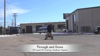 """Pit Bull """"lexie"""" Before And After Video! Pit Bull Trainers In Northern Virginia"""