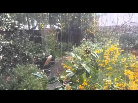 Rain in Sunnyvale, California