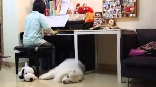 最好的債 鋼琴版--楊仟樺