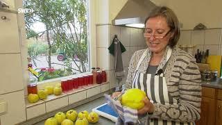 Quitte -  die ganz besondere Frucht   SWR   Landesschau Rheinland-Pfalz